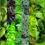 зелени суперхрани